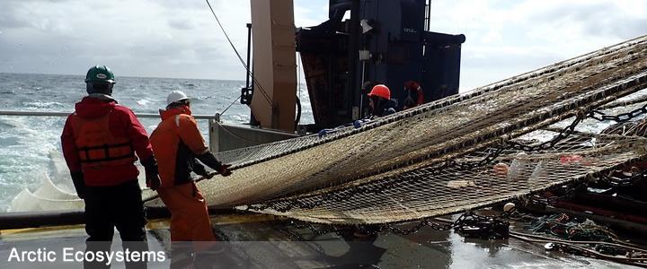 Pelagic Trawl nets sample fish in the water column - Alex Andrews