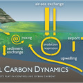 Coastal Carbon Dynamics