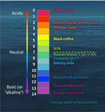 The pH scale with some common examples