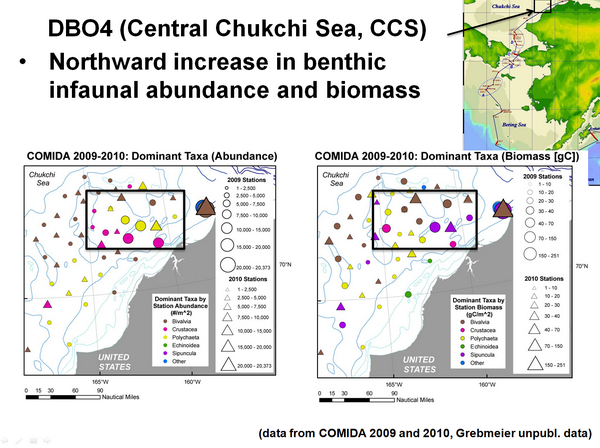 DB04 (Central Chukchi Sea, CCS) Northward increase in benthis infaunal abundance and biomass