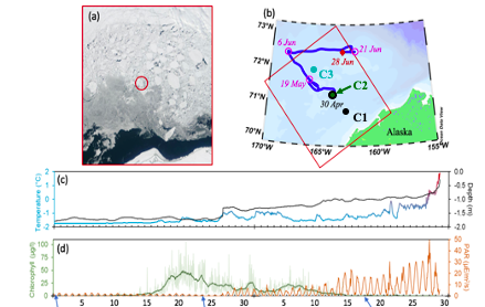 Map of the Chukchi Sea showing the track of a float as well as graphs of increasing temperature and chlorophyll concentration increasing from May to June with cloudy brown/green and clear images of under the ice.