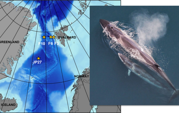 Map of North Atlantic with four yellow stars west of Svalbard of where Sei Whales were located with an image of a Sei Whale in water next to the map