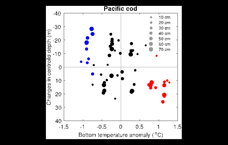 This diagram shows that Pacific cod were caught deeper in warm years (red dots), and shallower in cold years (blue dots), than in near-average years (black dots, average temperature ±1 standard deviation).