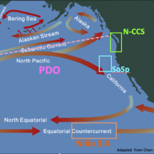 Map of the Pacific Ocean with arrows showing the different ocean currents as well as the formation of ENSO and PDO