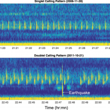 Spectrograms from Axial instrument illustrating the 2 primary song sequences observed.